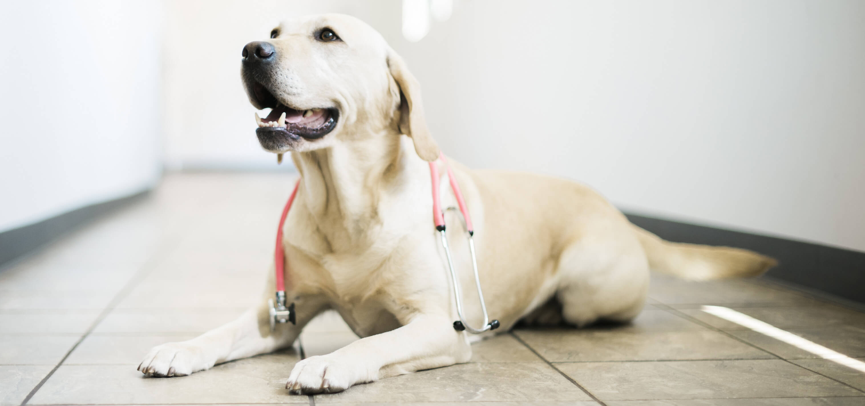 Top Rated Local Veterinarians – Seven Hills Veterinary