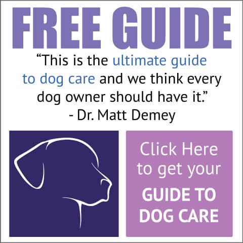 Ultimate guide to dog care