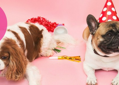 Hosting a Dog Party: Top 5 Tips for Success