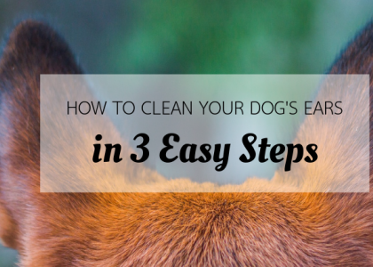 How to Clean Your Dog's Ears in 3 Easy Steps
