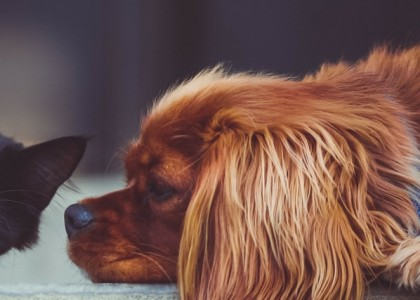 Are Your Pets Protected From Heartworms?