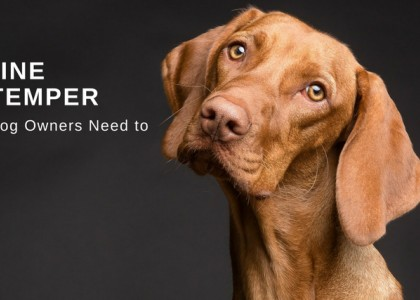 Canine Distemper - What Dog Owners Need to Know