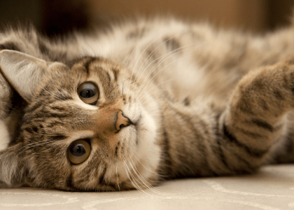 myths about cats your vet wants you to know