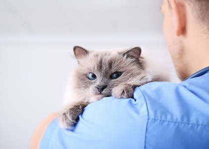 whether to take your cat to the veterinarian