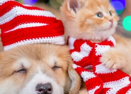 considerations before Christmas pets