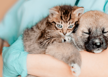 imported animals and rabies risks