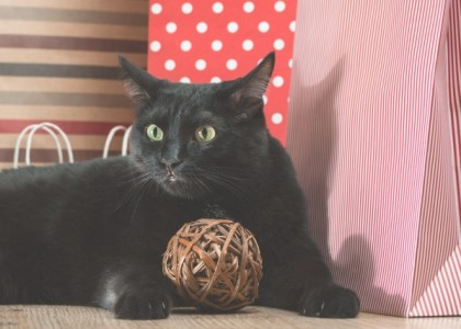 Photo of a cat surrounded by gifts