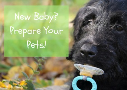 New Baby? Prepare Your Pets!