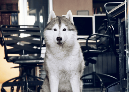 Take Your Dog to Work Day Tips