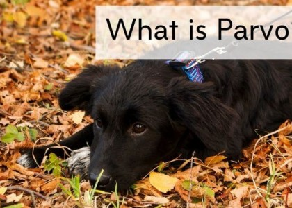 Puppy playing in leaves and grass
