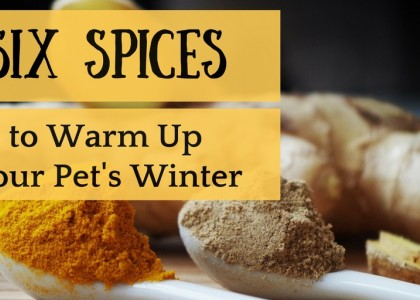 Winter Spices for Pets